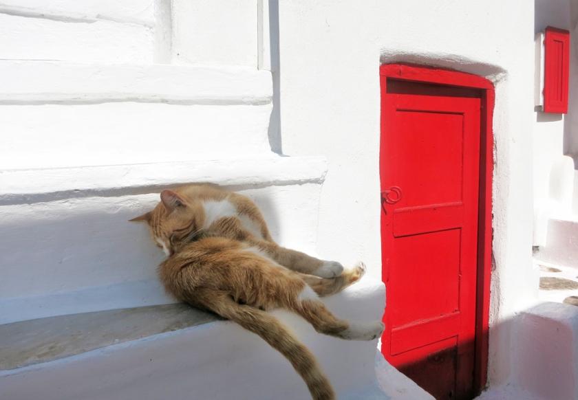 mykonos_cat