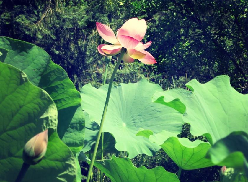Diomidous_botanical_garden_Athens