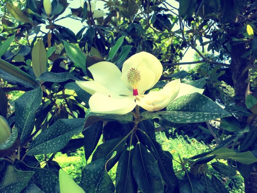 Diomidous_botanical_garden_Athens2
