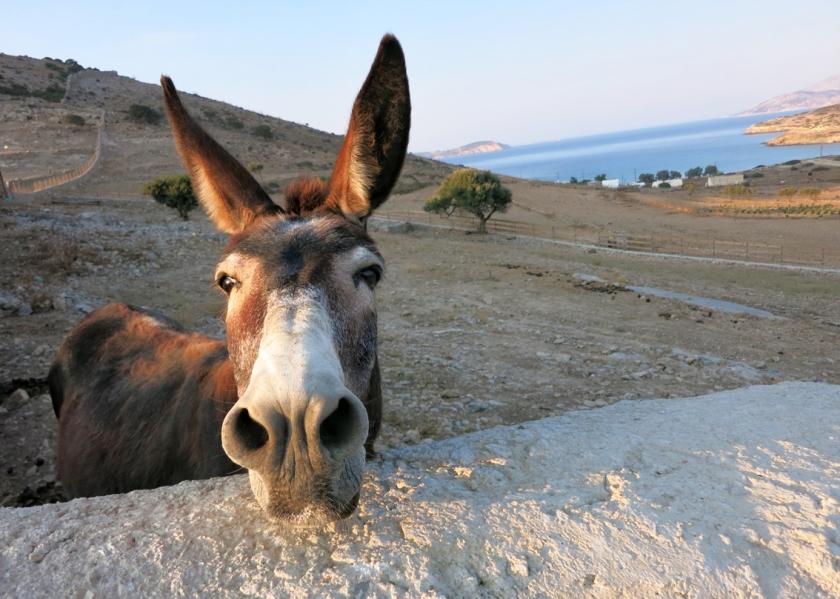 Schinoussa_donkey