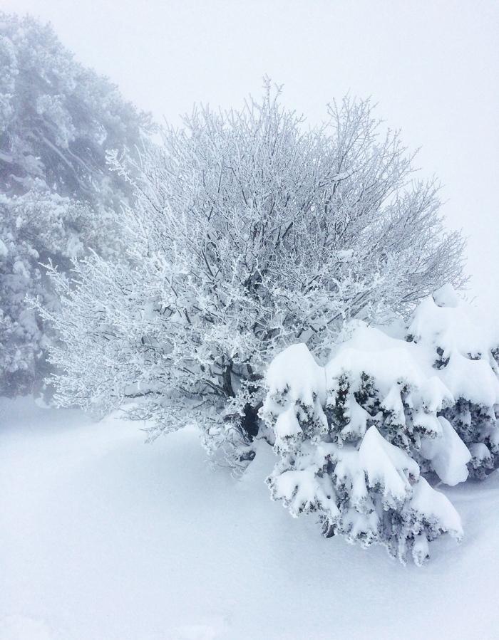 snow_nature