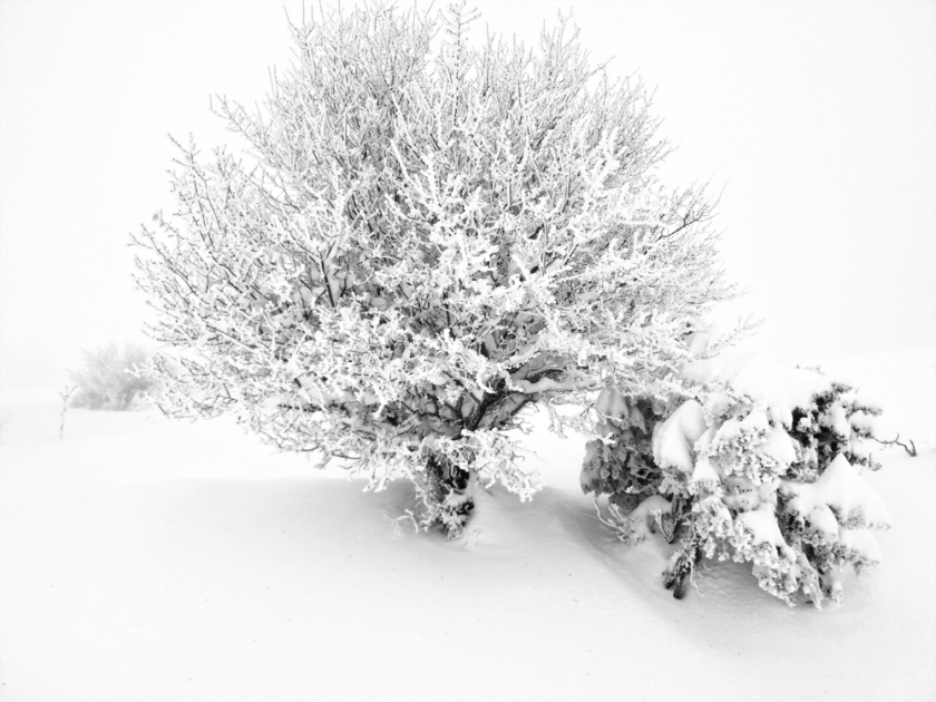 snow_ready