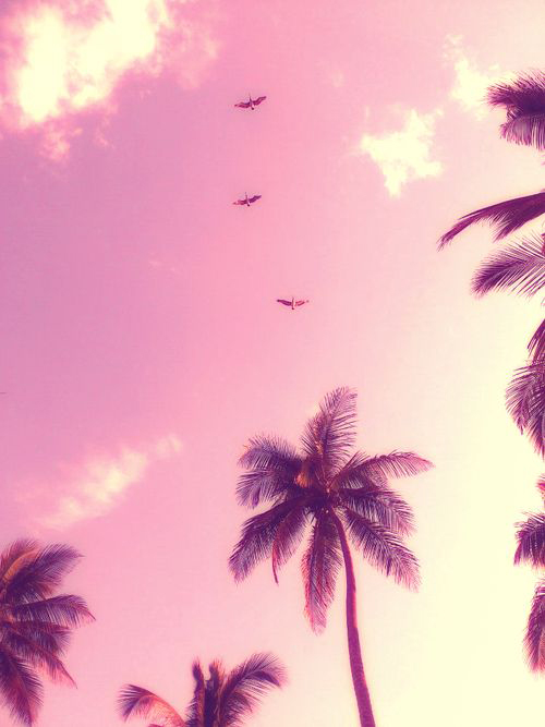 palm_trees