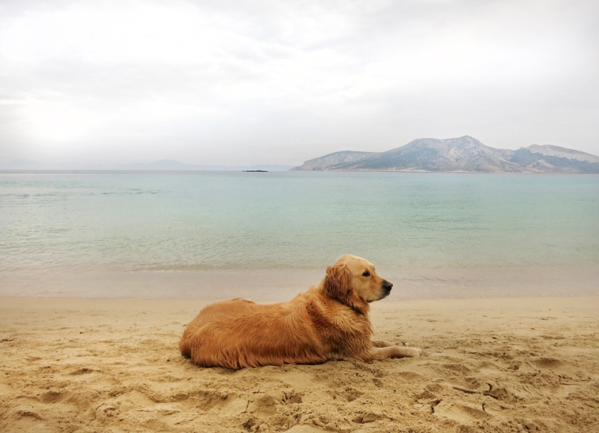 koufonisia_dog_beach